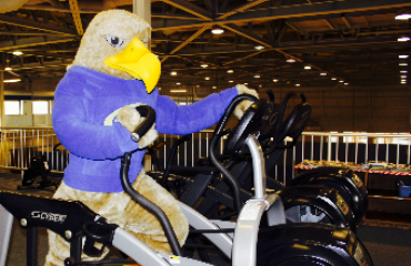Golden Eagle on fitness equip
